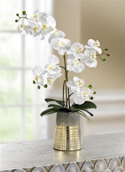 Orchidee im Topf weß